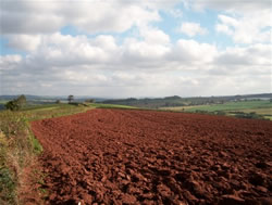 Redsoil of Devon